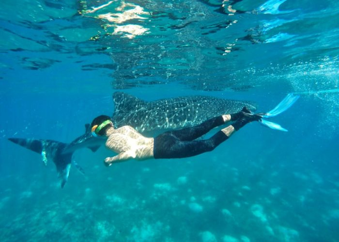 Is Whale Shark Watching In Oslob Worth Visiting?