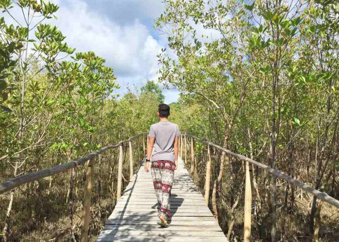 A Walk Around Bakhawan Eco-Park in Aklan