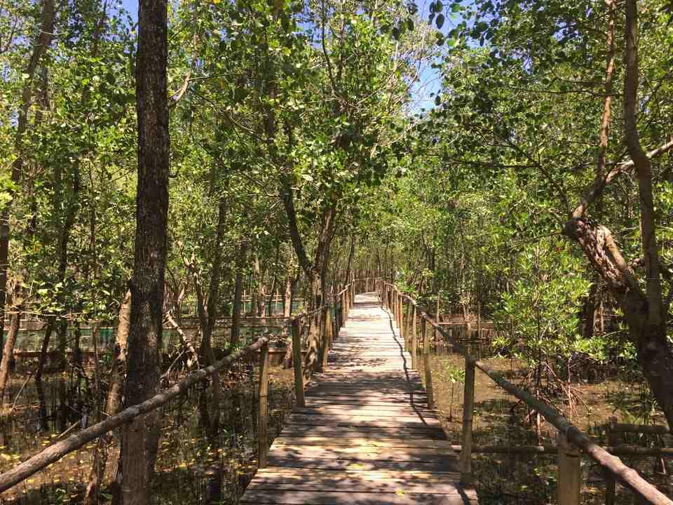 Bakhawan Eco Park